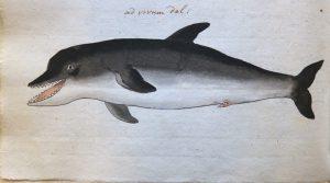 Een walvis in de gracht