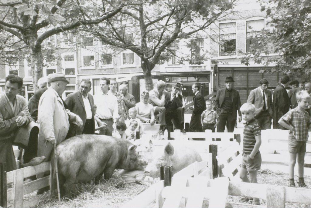 Veemarkt op de Beestenmarkt in 1969, foto R.J.Th. Hofschreuder (TMS 14019)